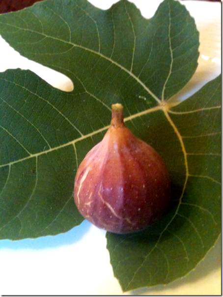 Fig and Leaf copy - good